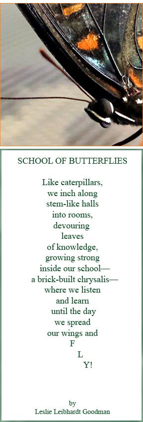 School of Butterflies